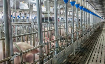Pork industry companies implement biosecurity technology to prevent the entry of asf and the spread of COVID-19