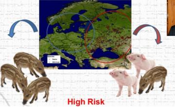 Sánchez- Vizcaíno destacó la importancia de reforzar las medidas de Bioseguridad en granjas con el objetivo de evitar la entrada de la Peste Porcina Africana